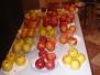 Zahrádkáři - degustace brambor 2013